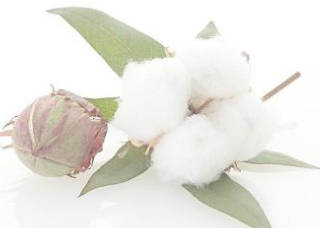 农业部:2017/18年度中国棉花总产量预计为547万吨