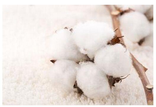 国庆中秋假期市场成交下降绗缝棉局部继续走畅
