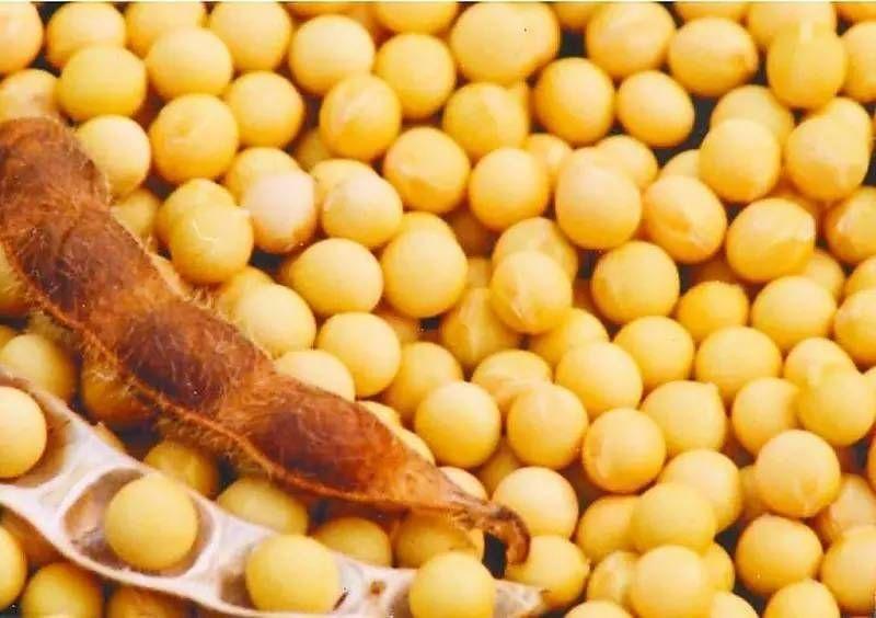 大豆价格受中美贸易战影响明显